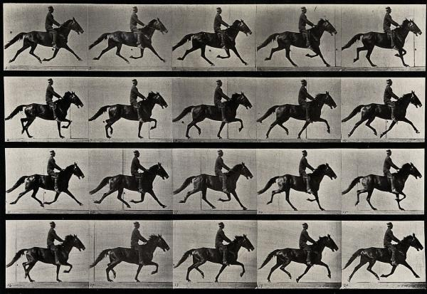1280px-A_horse_trotting._Photogravure_after_Eadweard_Muybridge_188_Wellcome_V0048736-1